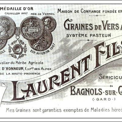Graines de vers a soie produites selon le systeme Pasteur