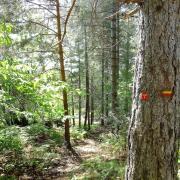 Mas Castagnere en Cévennes chemin de randonnée GRP4