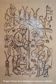 Pietro di cresenti decrit au xiveme siecle la plantation et le greffage des chataigniers