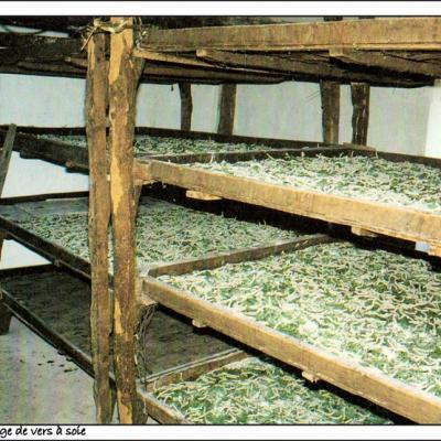 Claies installées dans les magnanerie pour la production des vers a soie